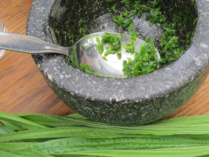 Spitzwegerich Tee oder Hustensaft salbe zubereitung handgemacht