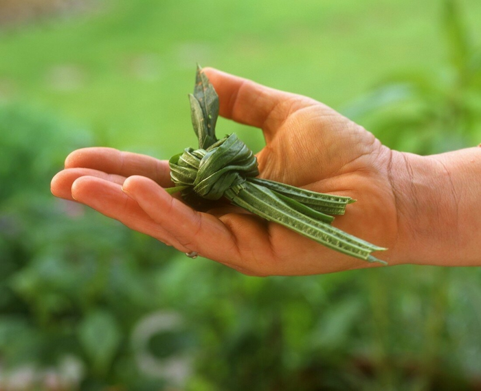 Spitzwegerich Tee oder Hustensaft salbe zubereitung kräutertee