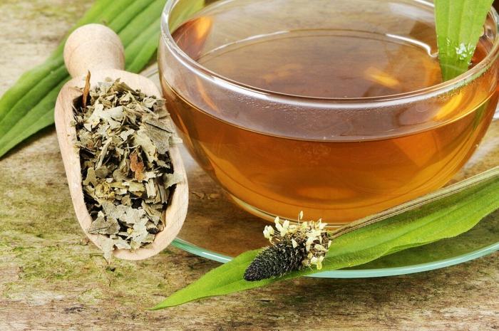 Spitzwegerich Tee oder Hustensaft salbe zubereitung