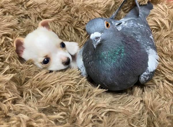 """Tauben vertreiben – so gewinnen Sie im Kampf gegen die """"Luftratten"""" hund taube freundschaft"""