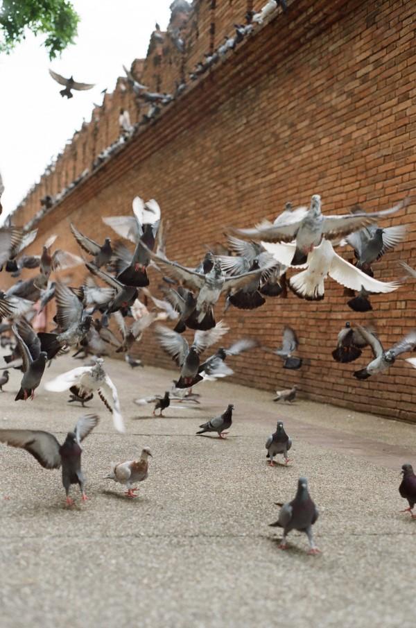 """Tauben vertreiben – so gewinnen Sie im Kampf gegen die """"Luftratten"""" überpopulation lösungen tauben"""