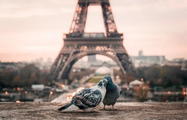 """Tauben vertreiben – so gewinnen Sie im Kampf gegen die """"Luftratten"""" paris tauben liebevoll"""