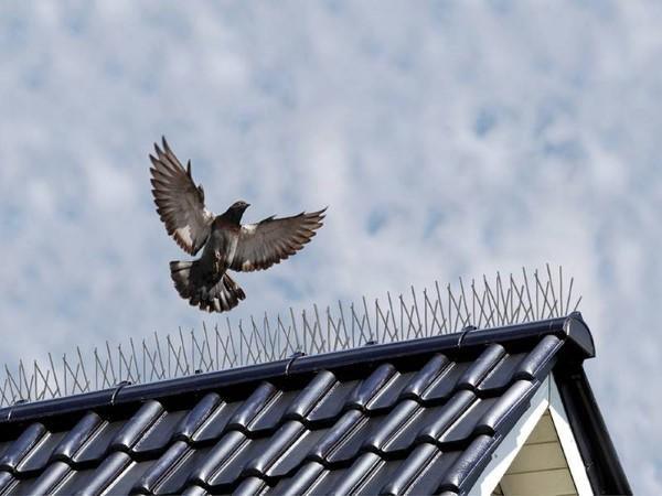 """Tauben vertreiben – so gewinnen Sie im Kampf gegen die """"Luftratten"""" stacheln anti tauben"""