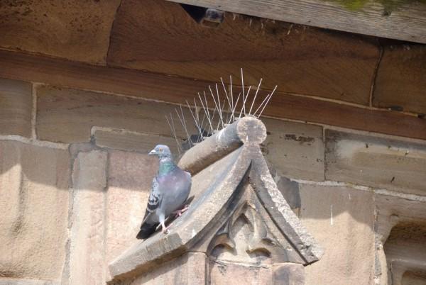 """Tauben vertreiben – so gewinnen Sie im Kampf gegen die """"Luftratten"""" taubenstacheln dach kirche"""