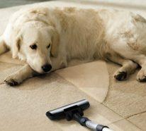 Teppich reinigen mit Rasierschaum- professionelle Tipps und mehr