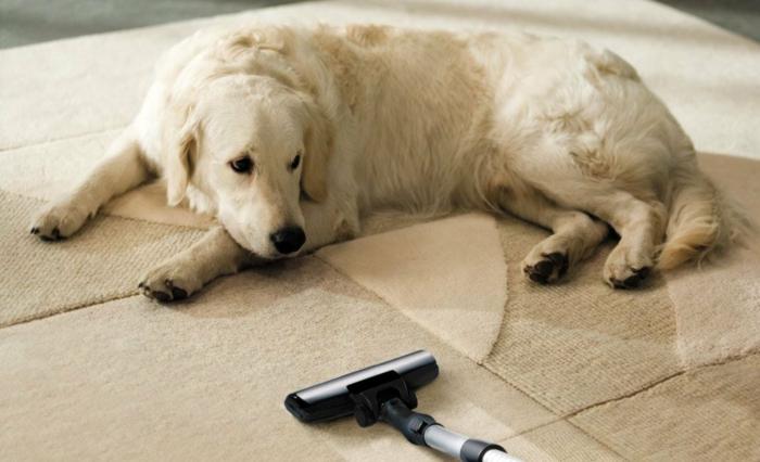 Teppich reinigen mit Rasierschaum haustiere