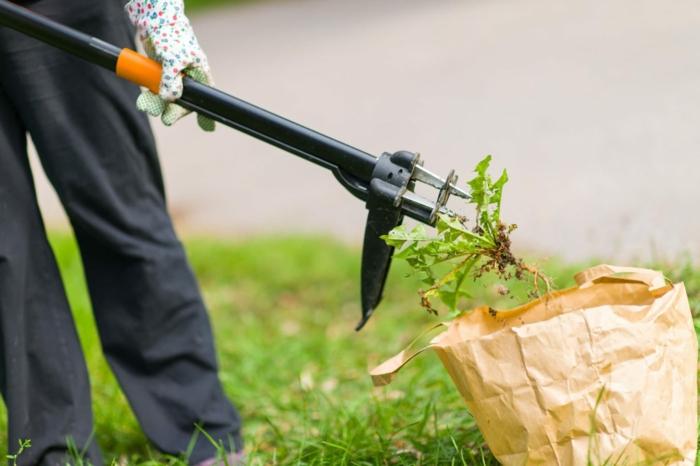 Unkraut aus Fugen entfernen werkzeug entwurzeln