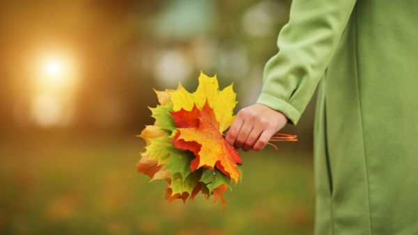 Wechsel der Jahreszeiten - tolle Herbstdeko