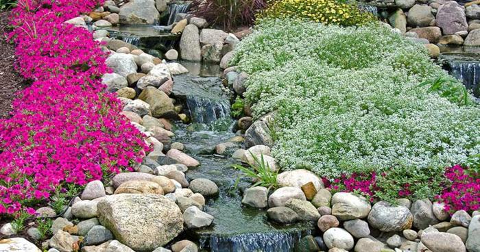 bodendecker die den ganzen sommer blühen beispiele