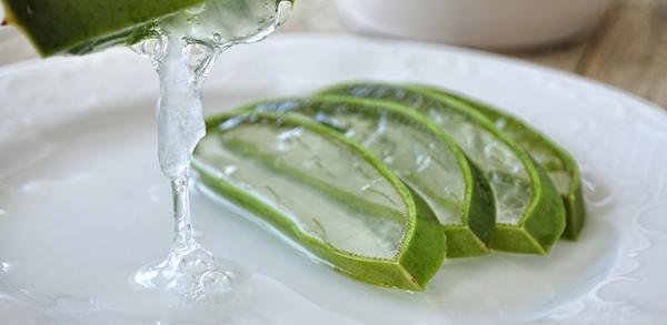 erfrischende Sommergetränke Aloe Vera Pflanze in dünne Scheiben geschnitten gesunde Eigenschaften