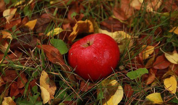 gesunde Ernährung Apfel Ideen