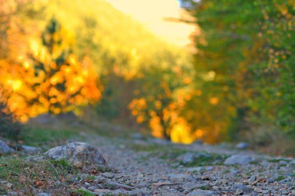 gesundes Leben tolle Herbstbilder