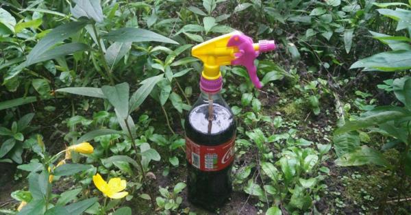 life hacks mit cola pflanzen düngen