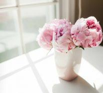 Pfingstrosen in der Vase länger halten und genießen