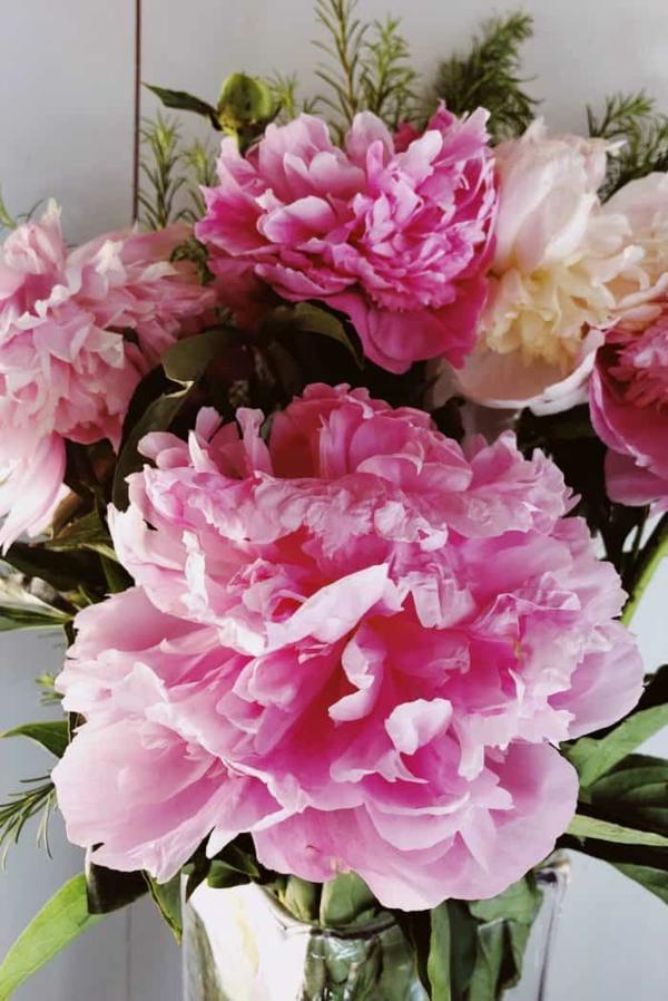 pfingstrosen in der vase frische farben schöne wohnungsdeko ideen
