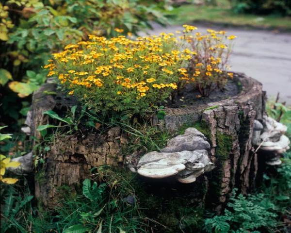 Baumstumpf dekorieren – kreative Ideen mit Liebe zur Natur blumentopf baum stumpf alt
