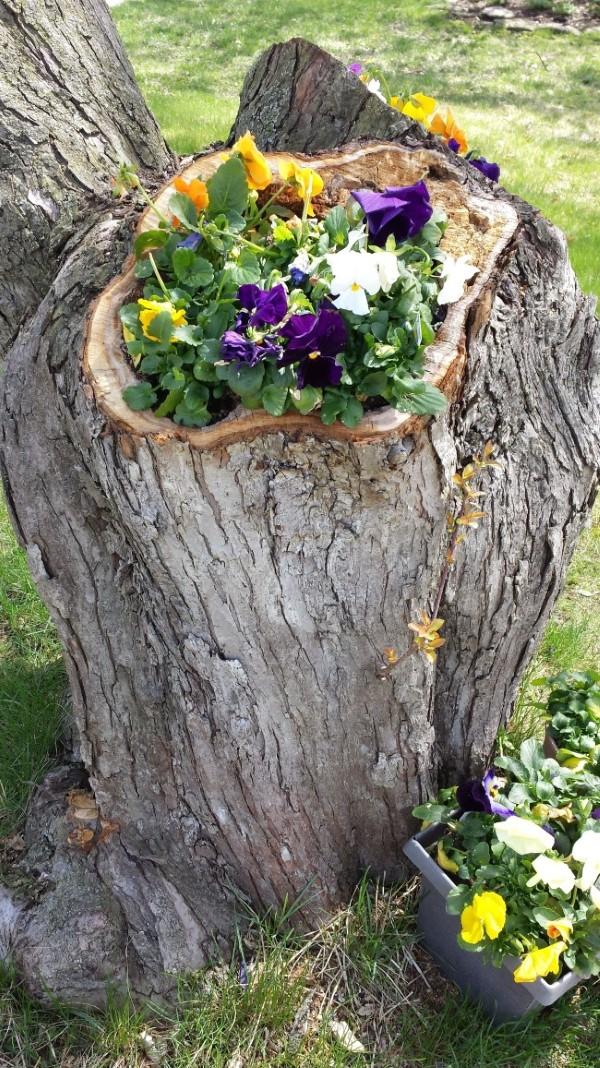Baumstumpf dekorieren – kreative Ideen mit Liebe zur Natur blumentopf holz natürlich