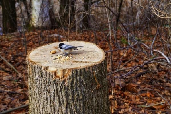 Baumstumpf dekorieren – kreative Ideen mit Liebe zur Natur vogelfutter station singvogel