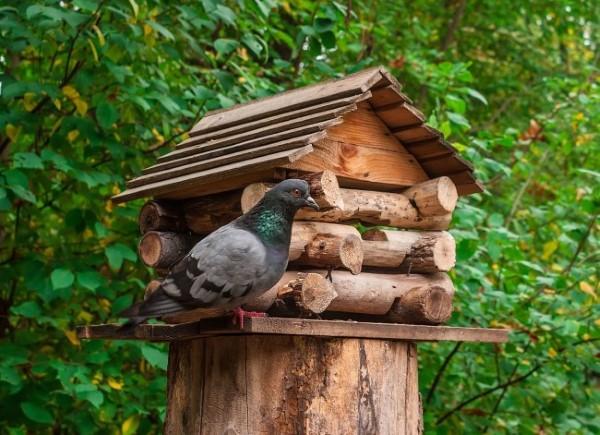 Baumstumpf dekorieren – kreative Ideen mit Liebe zur Natur vogelhaus tauben garten
