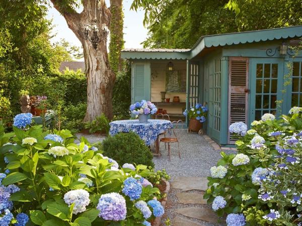 Echter Mehltau Hortensien Gartenpflanzen