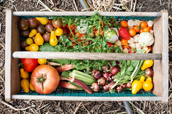 Ein Kleiner Gemüsegarten vor der Haustür – die Vorteile des eigenen Gemüseanbaus gemüsekorb mit ernte