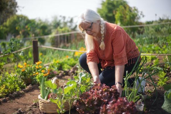 Ein Kleiner Gemüsegarten vor der Haustür – die Vorteile des eigenen Gemüseanbaus mit liebe zum natur und gesundheit