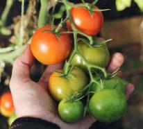 Ein Kleiner Gemüsegarten vor der Haustür – die Vorteile des eigenen Gemüseanbaus