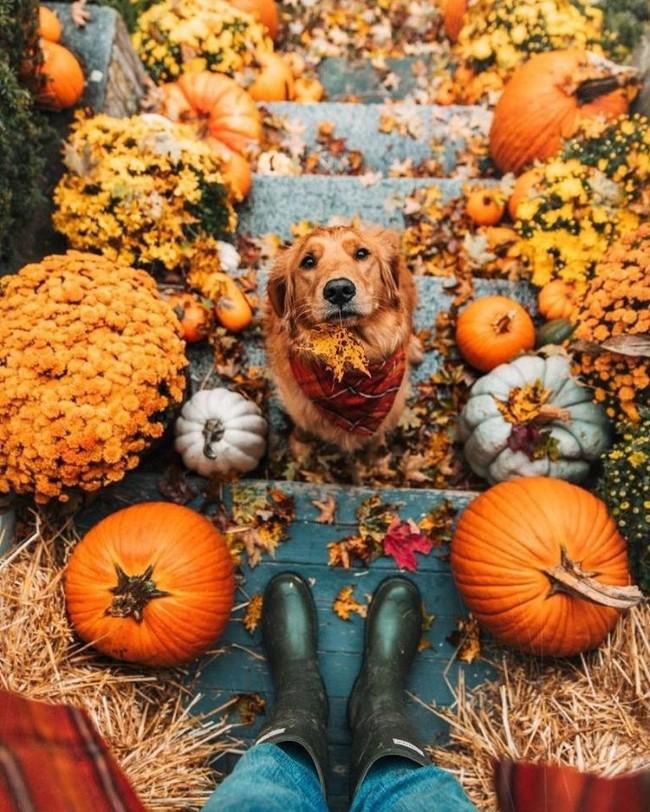 Einen märchenhaften Herbstgarten gestalten – farbenfrohe Ideen und Tipps eingang bereich hund kürbisse