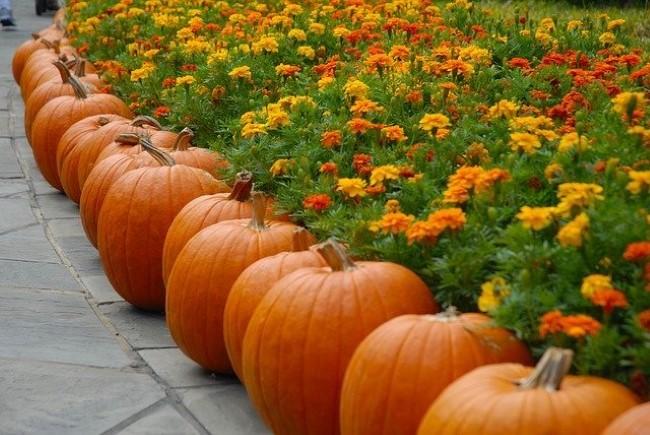Einen märchenhaften Herbstgarten gestalten – farbenfrohe Ideen und Tipps kürbis deko blumenbeet