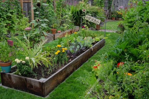 Gartenarbeit pflegeleichte Pflanzen Kräutergarten Tipps
