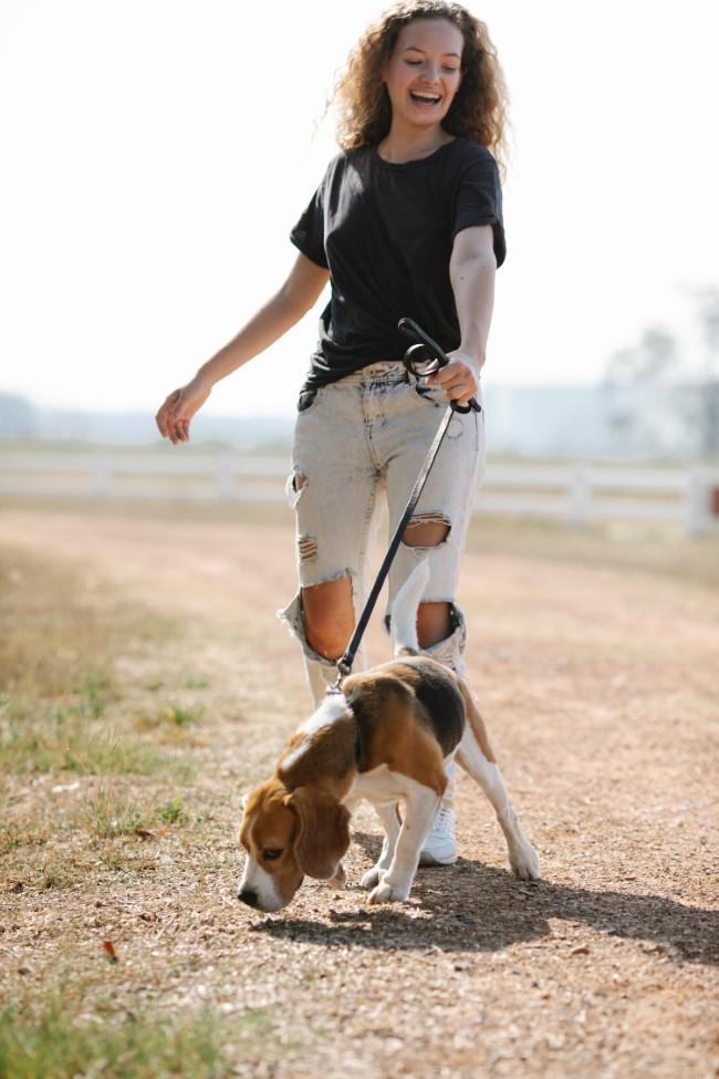 Gehen zum Abnehmen und andere Vorteile dieser Aktivität gehen mit dem hund