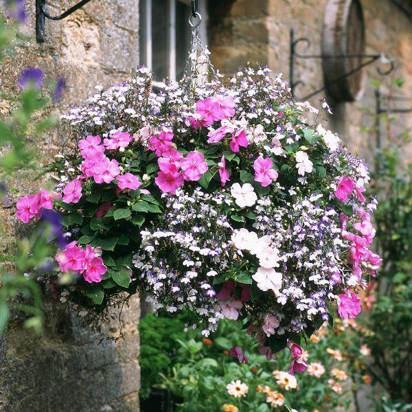 Hängepflanzen verschiedene Formen in Rosa und Lila
