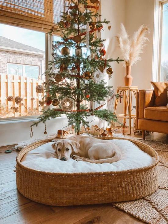 Hundebetten Flechtkorb großes Hundekissen gemütlich komfortabel Weihnachtsdekoration im Raum Tannenbaum warme Naturfarben