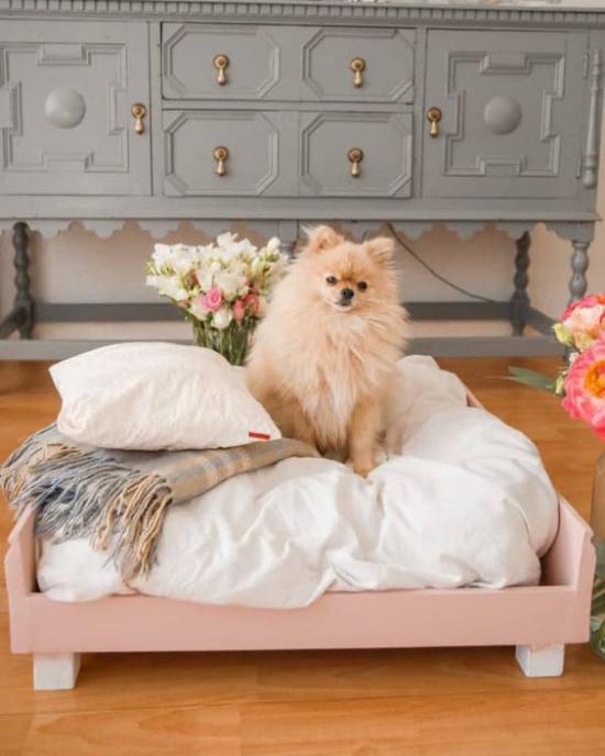 Hundebetten Spitz auf einem weichen Hundebett sich pudelwohl fühlen