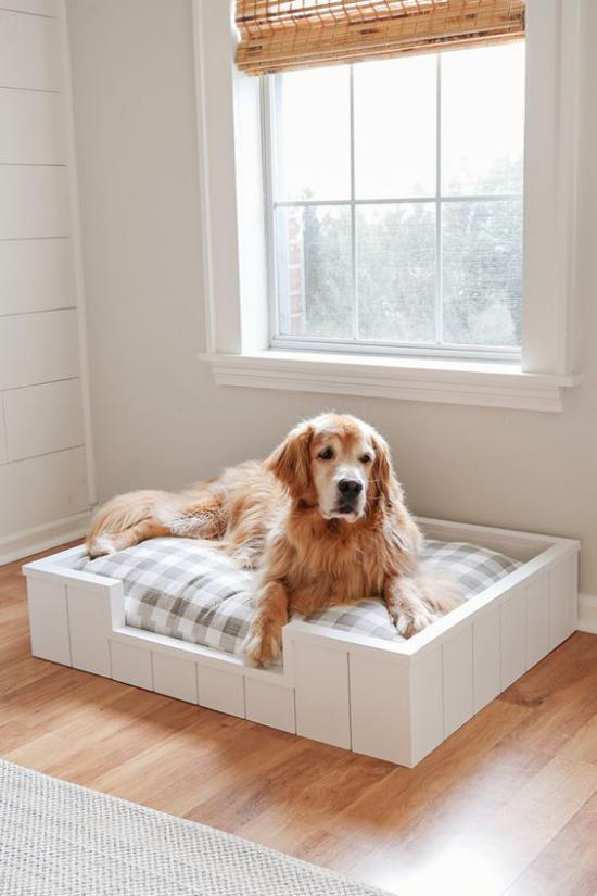 Hundebetten einfaches Modell groß genug für den Hund vor dem Fenster