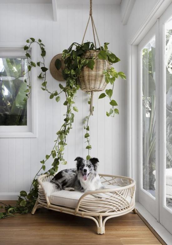 Hundebetten elegantes Modell in der Zimmerecke neben der Terrassentür Blumenampel Hängepflanze