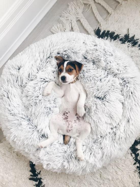 Hundebetten schickes Modell ein rundes weiches Kissen viel Komfort ein perfekter Ruheplatz für den Vierbeiner