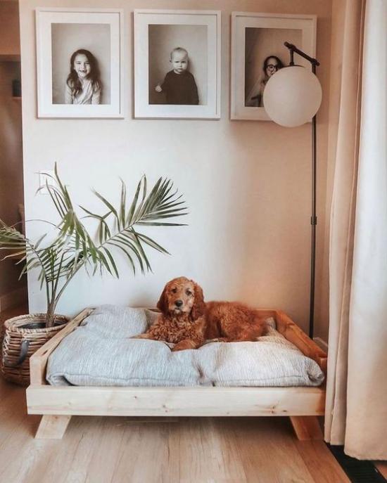Hundebetten tolles Modell in der Zimmerecke großes weiches Schlafkissen viel Komfort Stehlampe Wandbilder grüne Topfpflanze