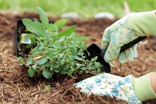 Plantando Ervas no Jardim 10 Possíveis Erros a Evitar