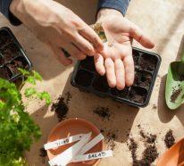 Kräutergarten anlegen: 10 mögliche Fehler, die Gartenanfänger begehen