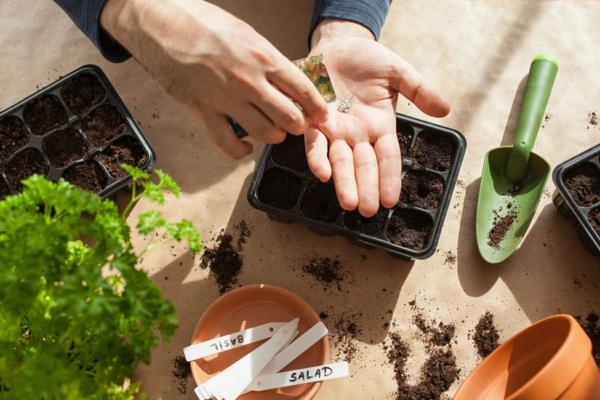 jardinagem, plantio em casa.  homem semeando sementes na caixa de germinação