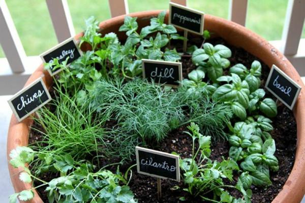 Criando um jardim de ervas 10 erros possíveis, misturando diferentes ervas