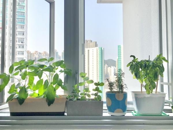 Crie um local ensolarado para o peitoril da janela do jardim de ervas com 10 erros possíveis,
