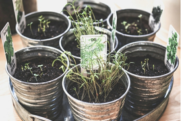 Criando um jardim de ervas Cultive ervas em vasos
