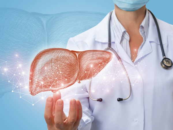 Doctor shows liver in hand .