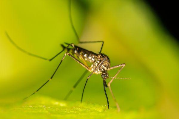 Repelir picadas de mosquito com eficiência