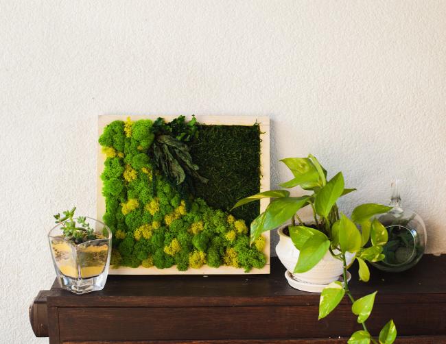 Moosbild selber machen – leichte DIY Anleitungen, Bastelideen und Tipps coole bilder abstrakt