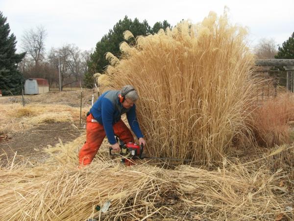 Pampasgras Unkraut schneiden Gartenpflanzen