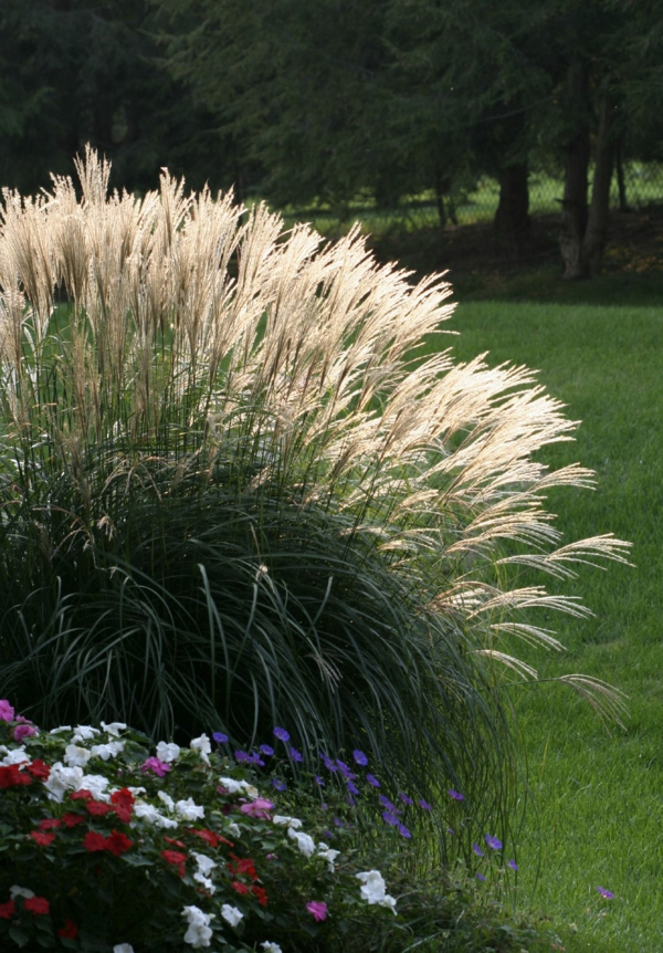 Pampasgras schneiden Garten Ziergras
