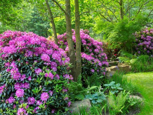 Schöne Gartenideen Naturgarten